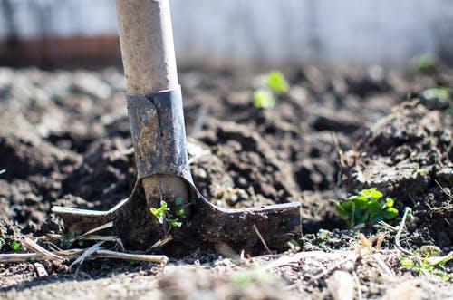 Økologisk have - den ultimative guide